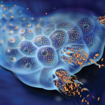 Гепатит B что нужно знать об этом заболевании